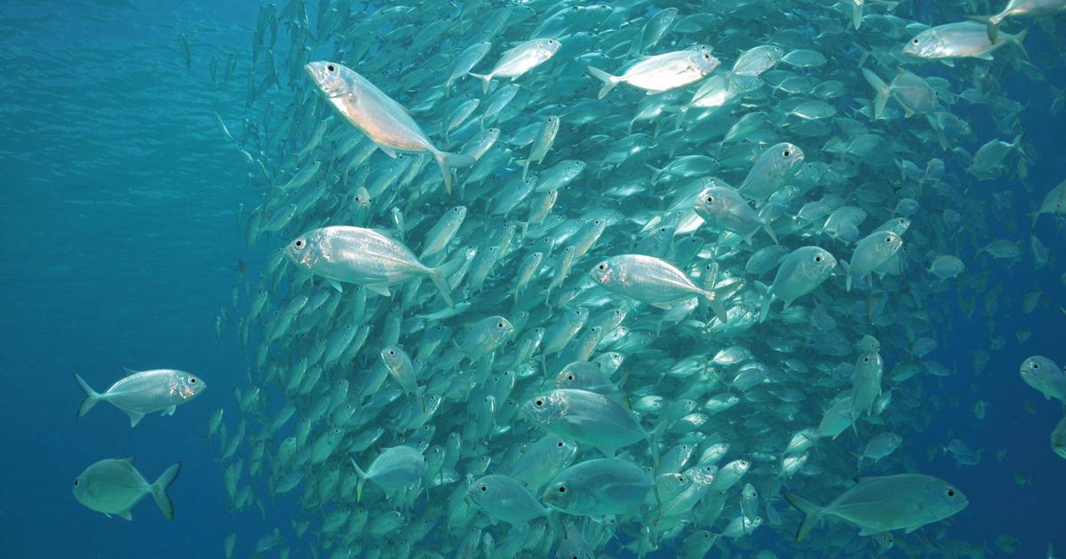 kolagen morski, kolagen rybi