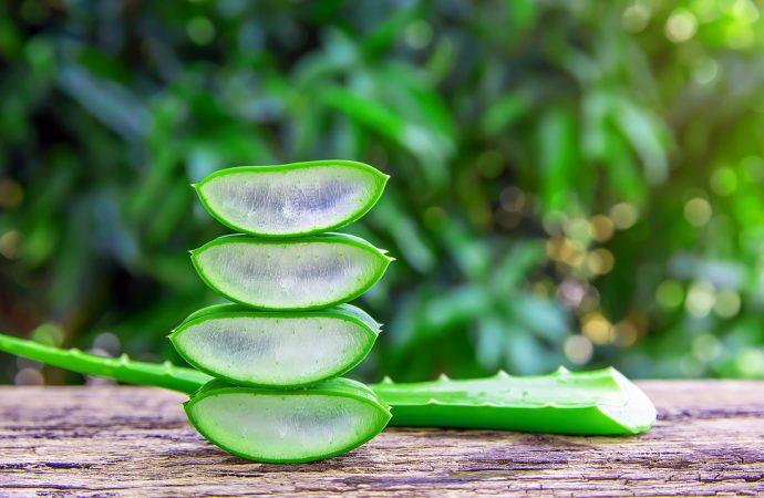 Aloes dla urody. Jak wykorzystuje się aloes w kosmetyce?