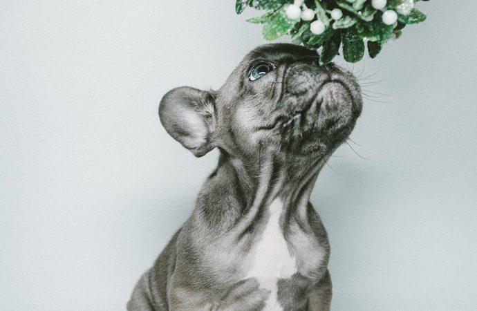 Czym jest artroza u psów i jak ją leczyć?