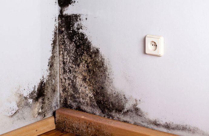 Jak usunąć pleśń ze ściany?