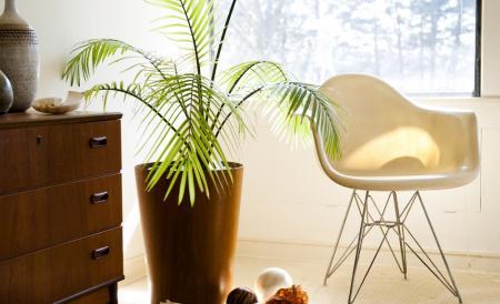 Najzdrowsze rośliny dla Twojego domu