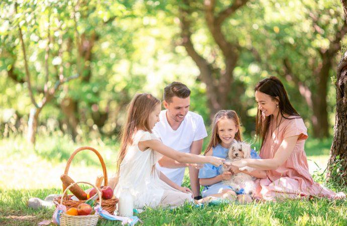 Co wziąć ze sobą na wiosenny piknik? Pomysły na lekkie przekąski