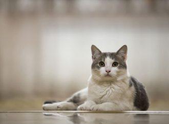 Ailurofobia – chorobliwy lęk przed kotami